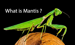 What is Mantis ?