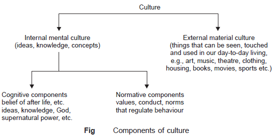 Components-of-culture