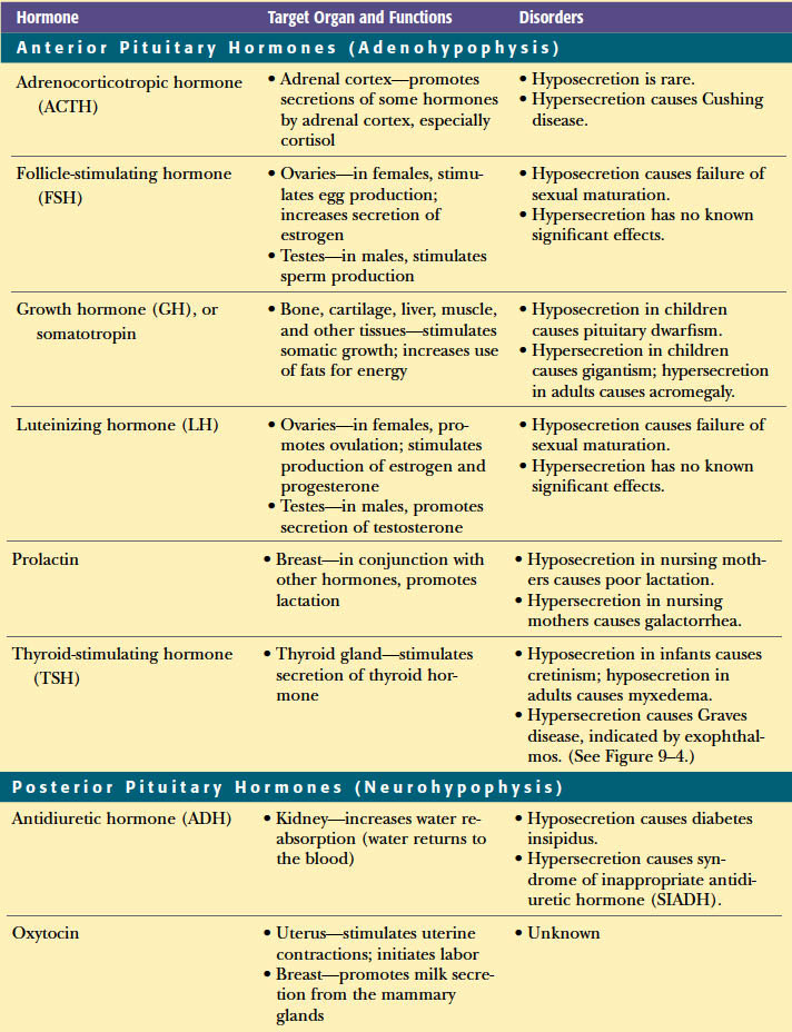 Endocrine System In Medical Terminologyadaptive Endocrine